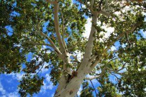 maple-tree-1392921515yeq-2